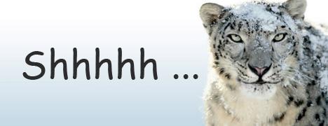 shhmbp-snow-leopard